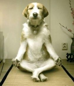 悟り犬.jpg